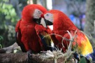 macaw-2671151_640